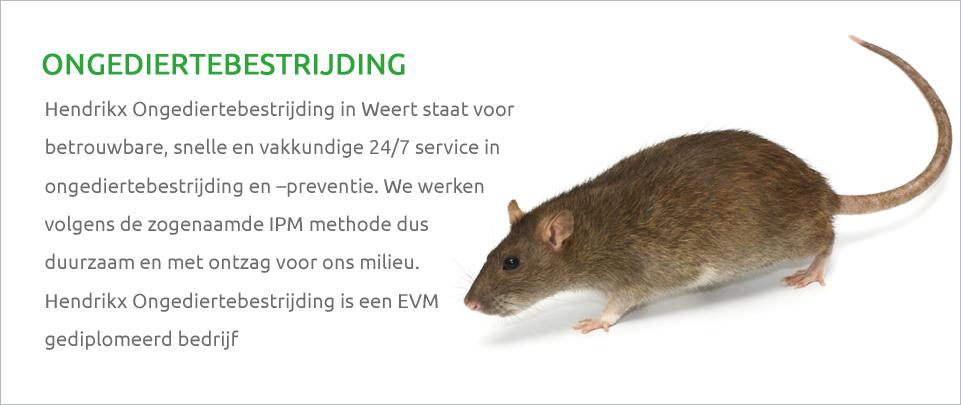 ongediertebestrijding-rat
